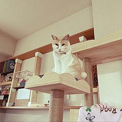 ベッドまわりではありません(^^;)/猫と暮らす♡/ディアウォール棚/キャットタワー☆/初上陸⁈...などのインテリア実例 - 2021-06-30 18:43:21