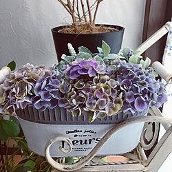ブリキの鉢/紫陽花はフェイクじゃないよ!/フェイクグリーン/いいね!ありがとうございます(*^^*)/植物のある暮らし...などのインテリア実例 - 2021-07-11 07:15:27