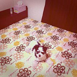 ベッド周り/ベッド/ベッドシーツのインテリア実例 - 2013-01-31 18:44:09
