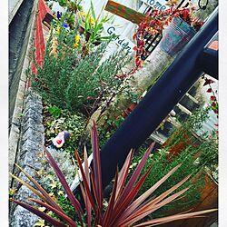 玄関/入り口/ジャンク/マイホーム/花/庭...などのインテリア実例 - 2016-02-12 08:37:38