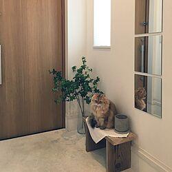 玄関/入り口/フェイクグリーン/IKEA/鏡/フラワーポット...などのインテリア実例 - 2017-03-29 13:02:33