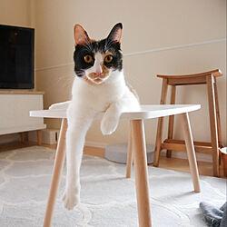IKEA/一人暮らし/1K/猫との暮らし/無印良品...などのインテリア実例 - 2020-11-01 08:29:26