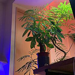 ワンルーム 狭い/シンボルツリー/一人暮らし/1Rに書斎空間/無印良品 スタッキングシェルフ...などのインテリア実例 - 2020-10-02 02:51:13