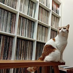 レコードのある生活/ねこのいる日常/レコードのインテリア実例 - 2021-04-25 20:29:49