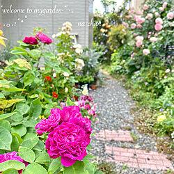 コレ、DIYしたよ!/自然を感じる暮らし/ガーデニング/花が好き♡/ナチュラルガーデン...などのインテリア実例 - 2020-05-28 09:31:36