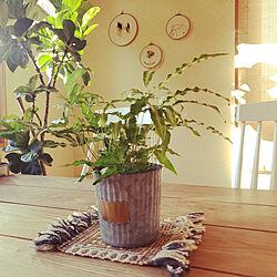 机/北欧/観葉植物/植物/グリーンのある暮らし...などのインテリア実例 - 2020-09-11 16:36:07