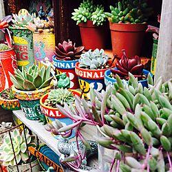 玄関/入り口/観葉植物/多肉植物/植物/JUNK缶...などのインテリア実例 - 2016-04-28 11:08:09