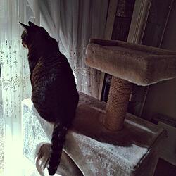 リビング/猫/ねこ/ねこのいる日常/猫と暮らす...などのインテリア実例 - 2019-01-24 11:53:38