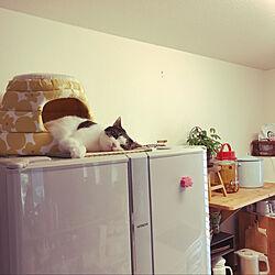 カフェ風/猫スペース/猫がいる暮らし/木が好き/DIY...などのインテリア実例 - 2020-10-03 20:59:43