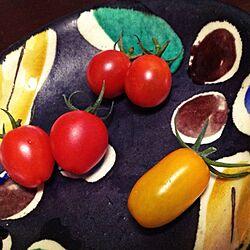 玄関/入り口/ベランダ菜園/ミニトマト/植物のインテリア実例 - 2013-07-14 22:57:52