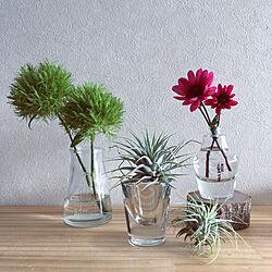 ベッド周り/セリアの瓶/花のある暮らし/空き瓶 再利用/空き瓶に植物をいける...などのインテリア実例 - 2018-10-18 09:18:25