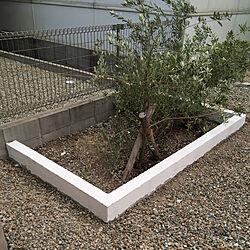 漆喰花壇/漆喰/漆喰DIY/ブロック/オリーブの木...などのインテリア実例 - 2020-05-16 23:55:20