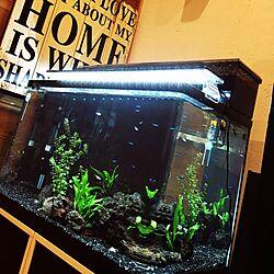 リビング/熱帯魚いろいろ/水槽のある部屋/流木/ネオンテトラ...などのインテリア実例 - 2016-11-04 18:47:37