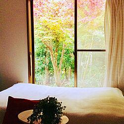 窓から見える景色/部屋全体のインテリア実例 - 2020-11-19 18:17:19