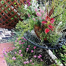 玄関/入り口/ガーデニング/小さなお庭/暮らしを整える/グリーンに癒される...などのインテリア実例 - 2021-08-07 07:48:30