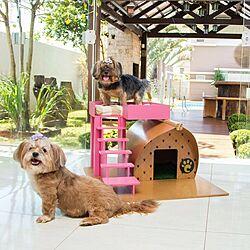 犬小屋DIY/犬小屋/ALLFORWAN/ALLFORWAN'sLIFE/わんこと暮らすインテリア...などのインテリア実例 - 2021-06-08 19:53:17