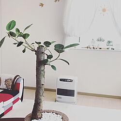 植物のある暮らし/好きなものに囲まれて暮らす/狭くても楽しい暮らし/賃貸インテリア/賃貸でも楽しく♪...などのインテリア実例 - 2021-03-13 08:38:58