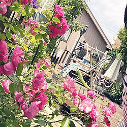 ブランコ/ブランコのある風景/アンジェラ/庭つくり中/レンガ敷き...などのインテリア実例 - 2021-05-15 12:27:03