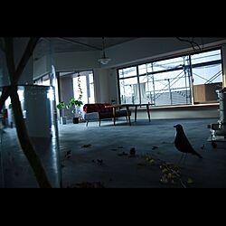 部屋全体/モルタルの床/落ち葉/松ぼっくり/どんぐり...などのインテリア実例 - 2014-11-22 11:28:48