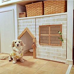 DIY/ペットと暮らすインテリア/ダックスフンド/ペットトイレ/ペットと暮らす家...などのインテリア実例 - 2021-05-04 21:18:25