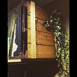玄関/入り口/観葉植物/ゆぴのこさん/木箱/一人暮らし...などのインテリア実例 - 2015-11-30 21:23:43