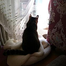 部屋全体/猫/ねこ/ねこのいる日常/猫と暮らす...などのインテリア実例 - 2018-11-02 09:55:43