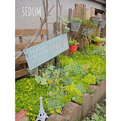 玄関/入り口/NO GREEN NO LIFE/多肉植物/ヘデラ/庭...などのインテリア実例 - 2015-06-21 08:45:50