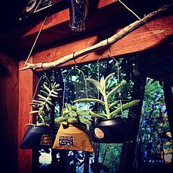 壁/天井/流木/リメ缶バッグ/セリアのアンティークシール/多肉植物...などのインテリア実例 - 2015-04-29 19:08:59