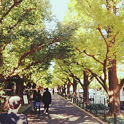 紅葉がキレイ/カフェテラス/銀杏の木のインテリア実例 - 2016-11-11 23:33:07