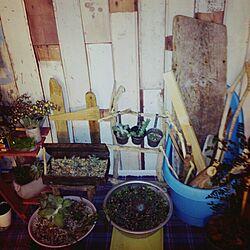 部屋全体/2階の廊下/植物のインテリア実例 - 2013-10-22 19:20:49