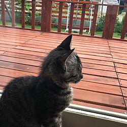 猫のいる家/猫のいる暮らし/猫のいる生活/ねこバカ部/日向ぼっこにゃんこ...などのインテリア実例 - 2020-07-19 15:42:17