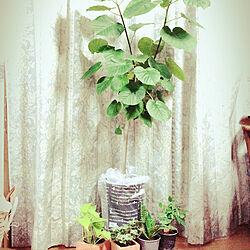リビング/カフェ風/ミニ観葉植物/観葉植物/植物のある暮らし...などのインテリア実例 - 2018-12-23 16:30:38