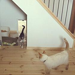 猫スペース/FREEQHOMES/Loafer/玄関/入り口のインテリア実例 - 2020-04-04 21:26:51