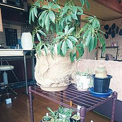 リビング/観葉植物のインテリア実例 - 2018-03-11 18:32:55