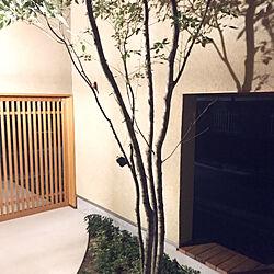 壁/天井/3coins♡/塗り壁の家/中庭のある家/木目が好き...などのインテリア実例 - 2017-08-25 21:33:56