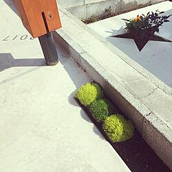 玄関/入り口/サギナ/モフリッチ/エクステリア/花壇...などのインテリア実例 - 2017-10-08 21:29:33