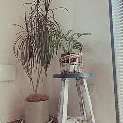 観葉植物のある暮らし/カインズホーム/観葉植物/リノベーション/中古住宅リノベーション...などのインテリア実例 - 2021-04-26 10:55:12