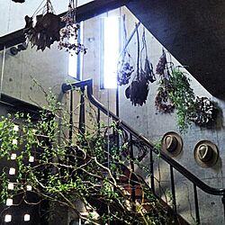 玄関/入り口のインテリア実例 - 2015-05-10 12:15:11