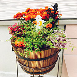 カボチャのオブジェ/寄せ植え/お花が好き/100均/ハロウィン...などのインテリア実例 - 2019-09-14 22:56:15