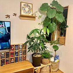 トミカ/ウンベラータ/パキラ/観葉植物/壁に付けられる家具...などのインテリア実例 - 2020-06-25 22:57:58