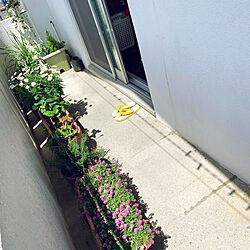 小さなガーデン/モニター応募投稿/植物のある暮らし/賃貸アパート/古いアパート...などのインテリア実例 - 2021-03-26 12:42:41