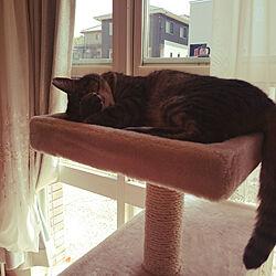 キッチン/ねこのいる日常/猫と暮らす/ねこが好き/ねこと暮らす。...などのインテリア実例 - 2018-03-29 12:50:32