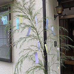 七夕飾り/100均/ダイソー/玄関/入り口のインテリア実例 - 2021-07-07 09:44:40