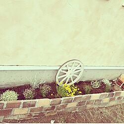 玄関/入り口/花壇/レンガ花壇/レンガ/お庭のインテリア実例 - 2015-06-23 11:35:07