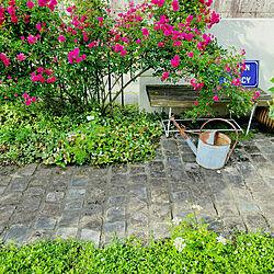 庭/ガーデン/ガーデニング/バラ/パリの石畳に憧れて...などのインテリア実例 - 2021-06-07 20:58:01