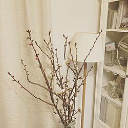 IKEA/ホワイトインテリア/夫婦暮らし/2DK/賃貸アパート...などのインテリア実例 - 2021-03-27 13:28:45