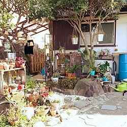 玄関/入り口/ハンドメイド/DIY/手作り/観葉植物...などのインテリア実例 - 2016-08-08 22:01:09