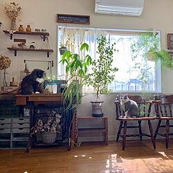 モッシュ/ムック/保護ねこ部/観葉植物/DIY...などのインテリア実例 - 2019-05-22 11:10:11