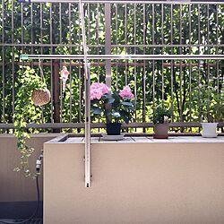 リビング/ベランダ/観葉植物/雑貨/マンションのインテリア実例 - 2015-05-31 14:10:57