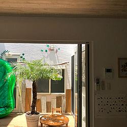 フェニックス#ヤシの木/ヤシの木がある暮らし/手作り家具/イスDIY/ちゃぶ台...などのインテリア実例 - 2020-05-30 22:46:07